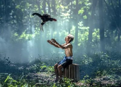 幻想的な森に差し込む光とニワトリと老人